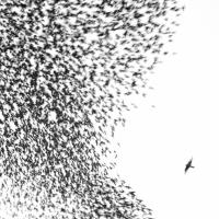 Wilco – Sky Blue Sky album cover